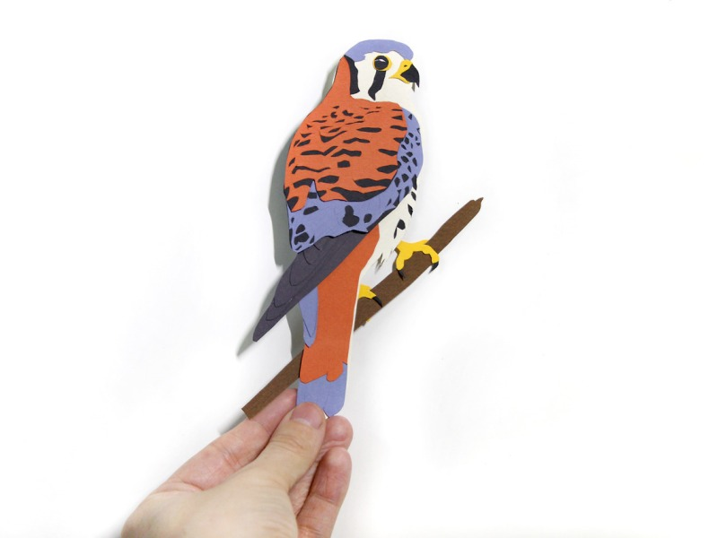 Kestrel Paper Cut